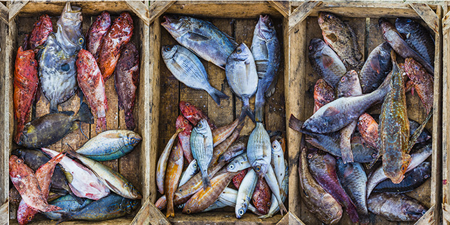 Fish in wooden boxes